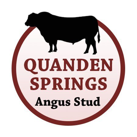 Quanden Springs Angus Stud